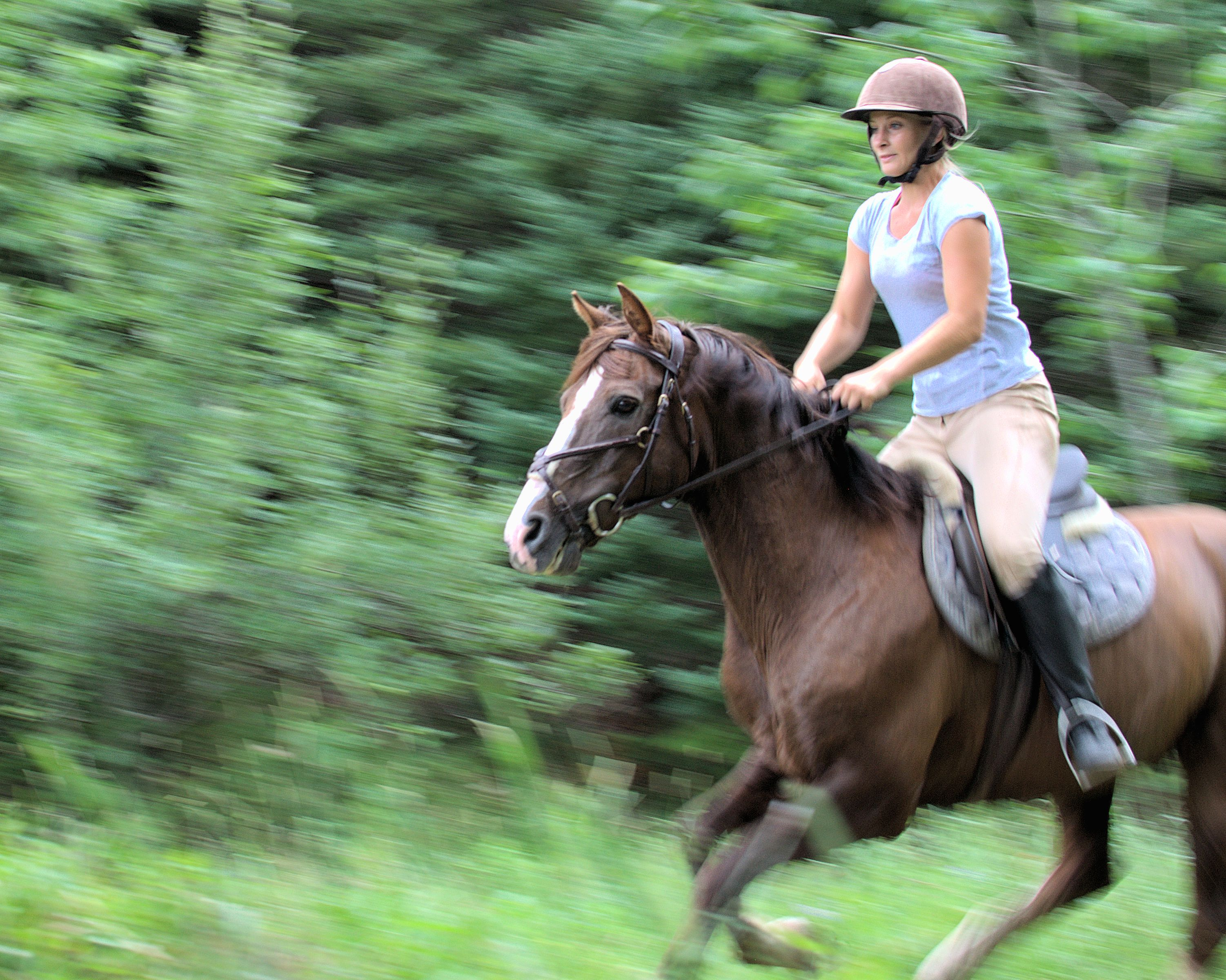 Tips for the care and brain of the horsehair